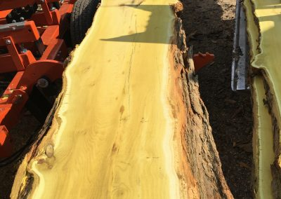 Milling a beautiful Osage orange log